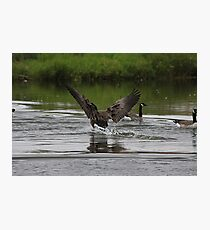 Smooth Landing Photographic Print