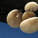 Porcelain fungi by Jane Corey