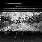 Black tunnel, white trees by Sam Ryan