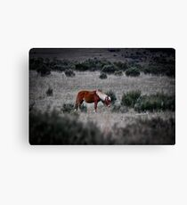 Peppercorn Brumby Canvas Print