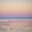 shark bay sunrise by col hellmuth