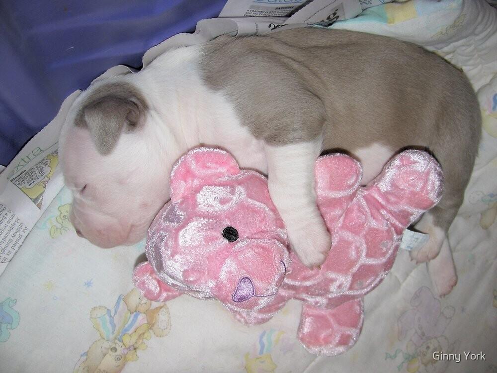 Sleep Tight by Ginny York
