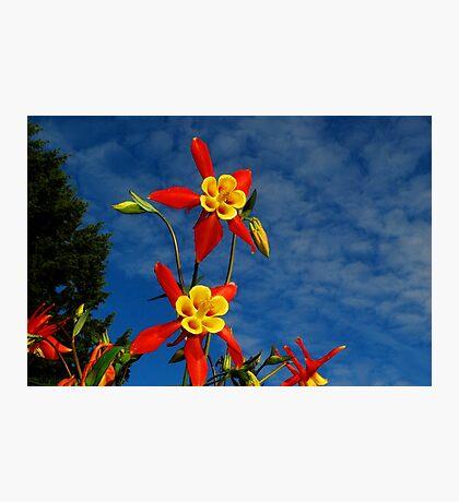 Blue Skies & Columbine Photographic Print