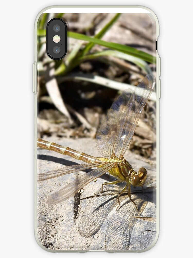 Dragonfly on rock by clearviewstock