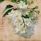 Vintage Jasmine  by Irene  Burdell