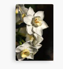 Daffodils Day Canvas Print
