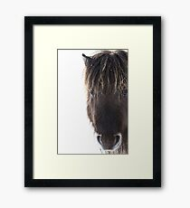 Shetland pony with ice in mane Framed Print