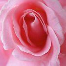 Pretty In Pink by Hank Eder