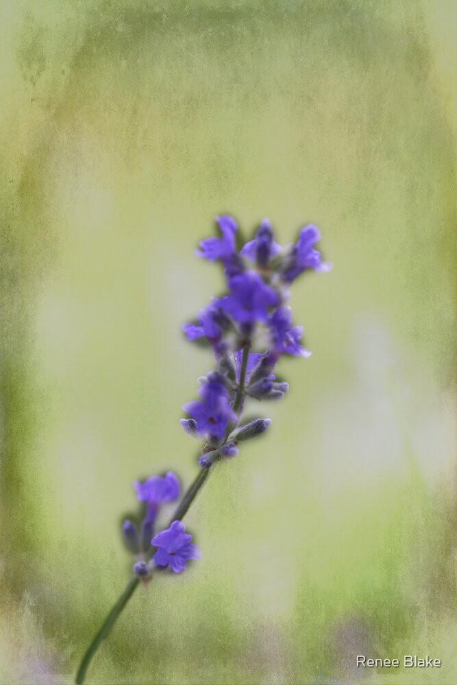 Lonely Lavender by Renee Blake