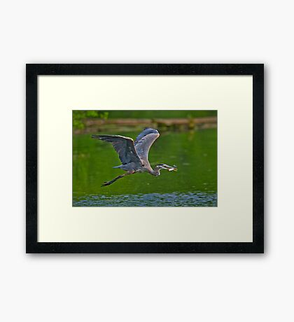 Off with a Prize Framed Print