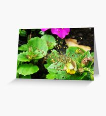 Fly Hunting Greeting Card