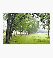 oak allee Photographic Print