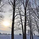 Snow Trees and Winter Sunlight by Nick  Gill