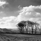 Cleeve Hill, Gloucestershire by Nick  Gill