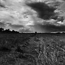 Rice Fields by Michael Dunn