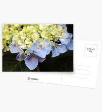 Blue Hydreandra Postcards