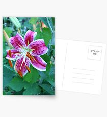 Stargazer Lily Postcards