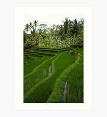 Rice paddies @ Gunung Kawi  Art Print