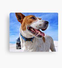 Australian Cattle Dog On Beach Canvas Print