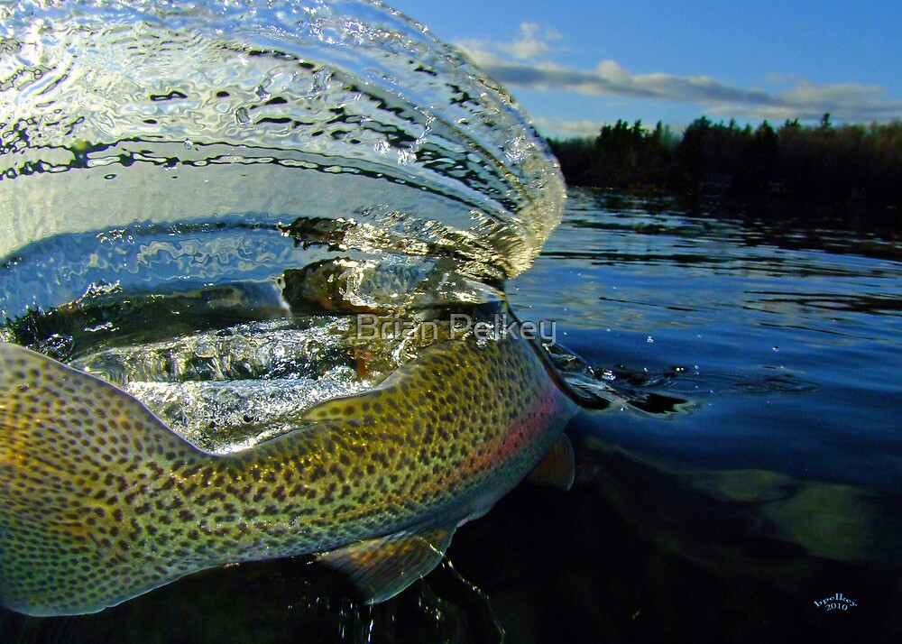 The Way Of The Trout by Brian Pelkey
