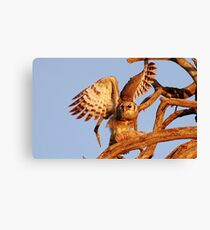 THE GIANT EAGLE OWL - and the weavers nest Canvas Print