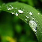Curves and drops by Tracy Friesen