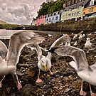Gull Heaven by John Dewar