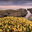 Birsay Gold by John Dewar