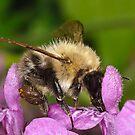 Pollination 24 by Gareth Jones