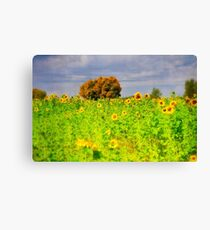 Rigby Idaho - Dreaming Of Sunflowers Canvas Print