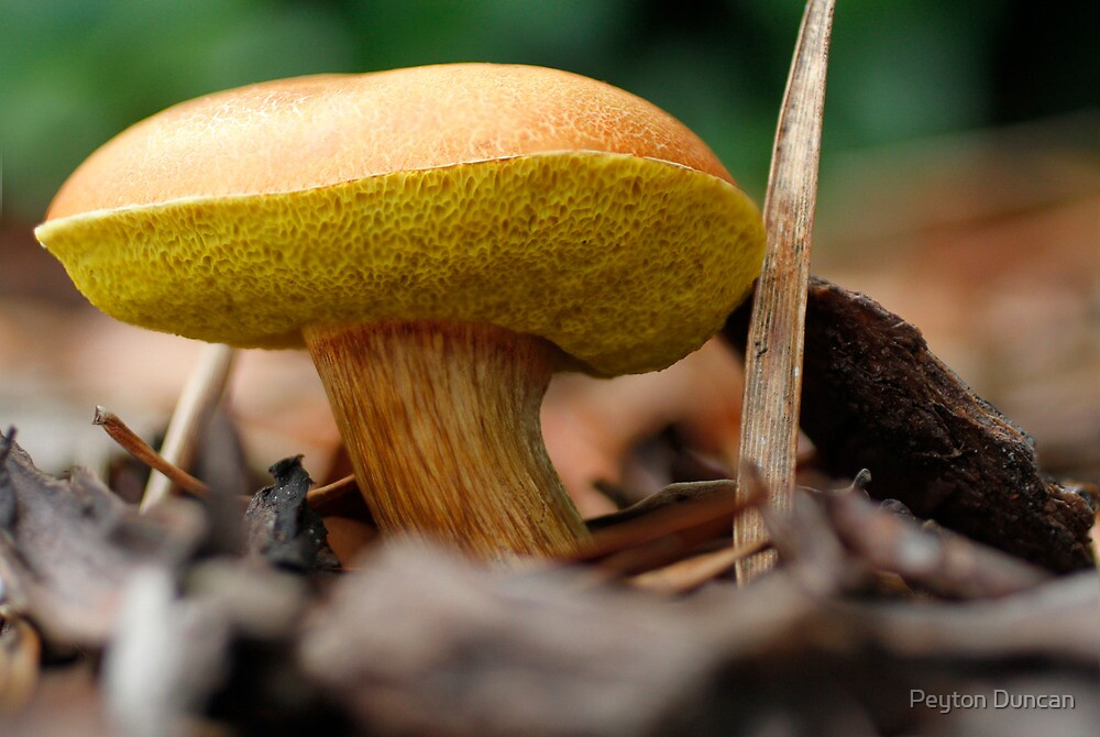 Orange and yellow Mushroom by Peyton Duncan