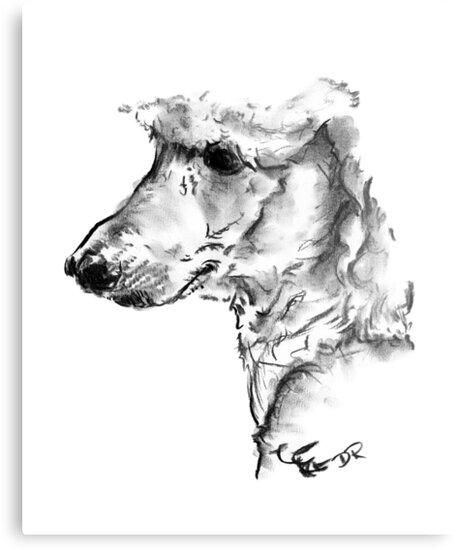 Poodle Drawing by Douglas Rickard