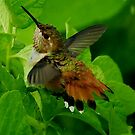 HUMMINGBIRD BATH TIME by RoseMarie747
