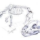 Jaguar Skeleton by Marcus  Gannuscio