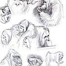 Orangutan sketches by Marcus  Gannuscio