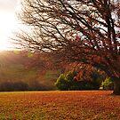 Oak Sun by - Zig -