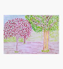 Red and Green Tree Photographic Print
