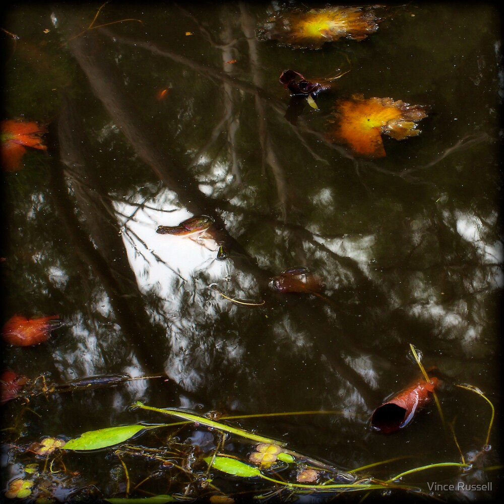 Pond Impressions by Vince Russell
