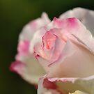Soft Pinks by MissyD