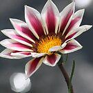 Purple & White Flower by Karyn Boehmer