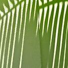 Palm Shadow - 4 by Susana Weber