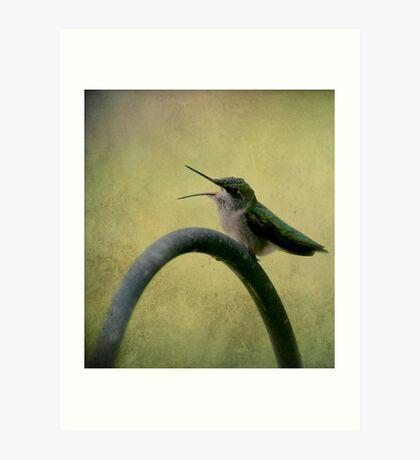 Hummingbird Talk  Art Print