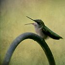 Hummingbird Talk  by Renee Blake