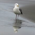 Adult Seagull by art2plunder