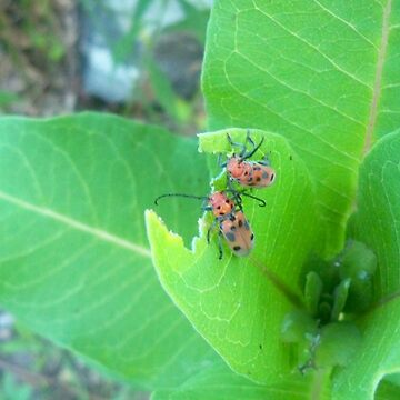 two bugs eating by Alexander589