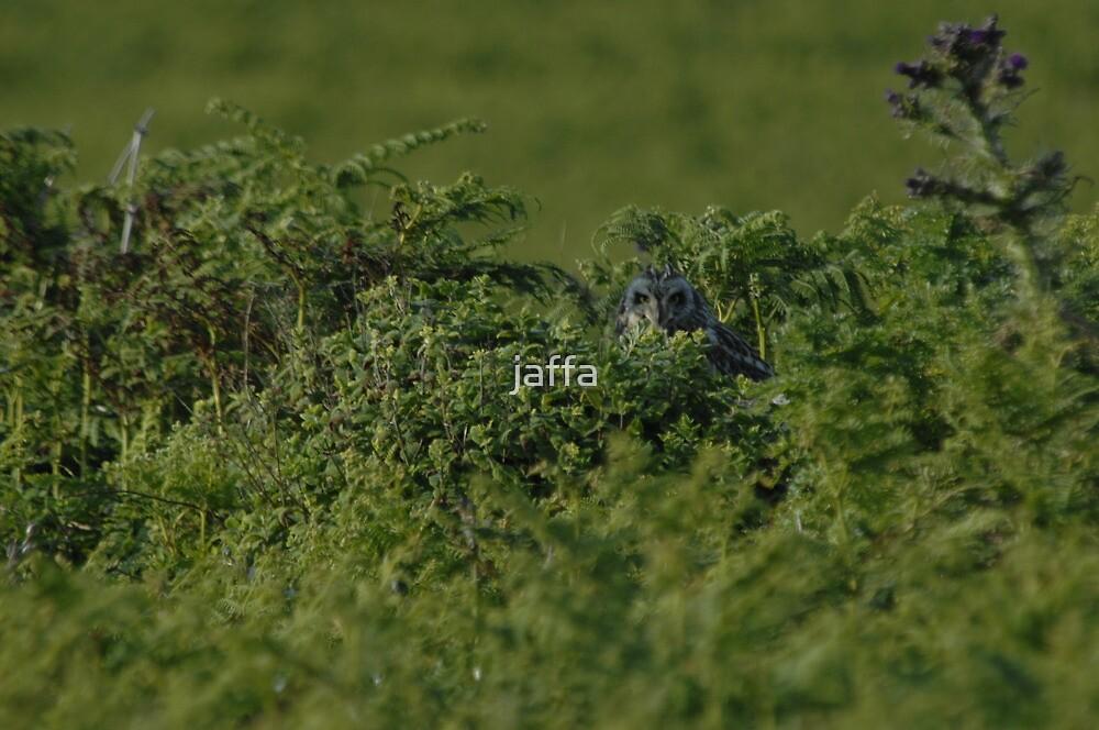 Short eared owl by jaffa