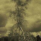 The Birch by MLabuda