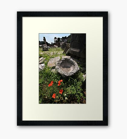 Flowers in The Forum Framed Print