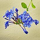 Benedictine Blue by lastgasp