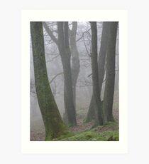 Tree trunks in the mist Art Print